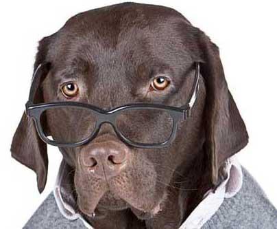 lab-with-glasses3.jpg